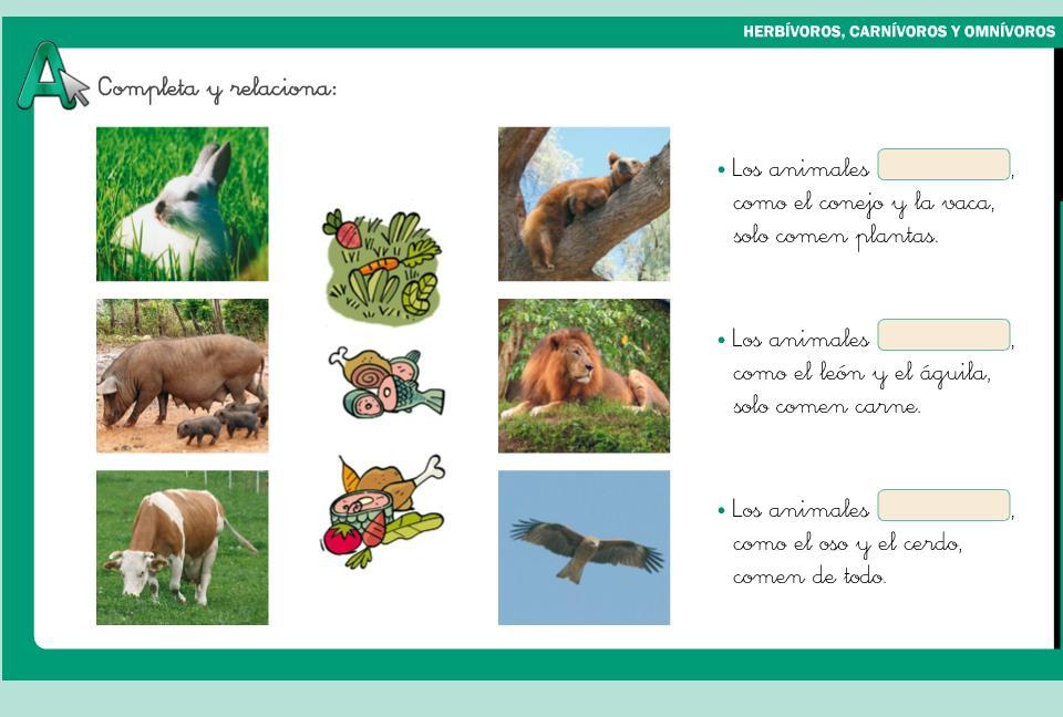 Clasificacion De Animales Herbivoros Omnivoro Carnivoro
