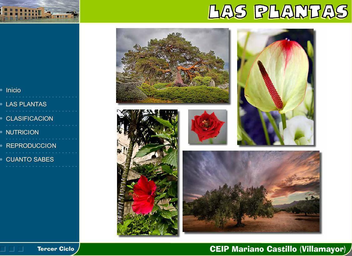 Tipos de plantas por su duracion v rias - Tipos de plantas ...