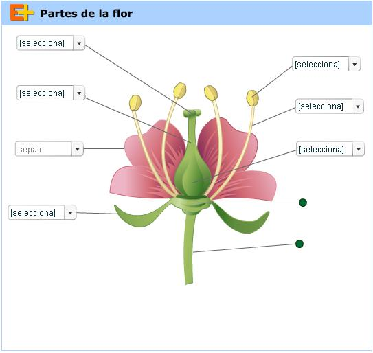 PartesFlor.JPG